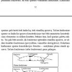 Lonzeronu tipai 150x150 - pamoka_nr_4