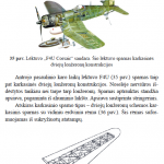 Lonzeronu tipai3 150x150 - Pamoka Nr 1